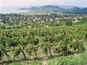 Wine Tasting in Hungary-2